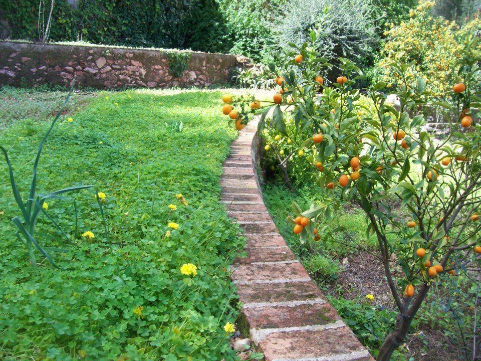 donde comprar casa en España valencia naranjos